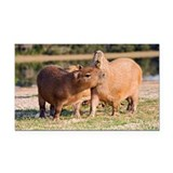 Capybara by a lake - Car Magnet