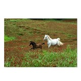 Funny Lipizzan Postcards (Package of 8)