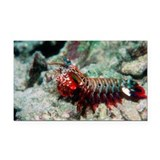 Mantis shrimp - Car Magnet