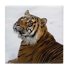 Tiger Laying In Snow Tile Coaster