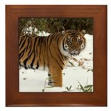 Tiger Standing in Snow Framed Tile