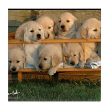 Cute Golden retriever puppy Tile Coaster