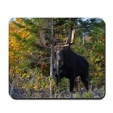 Moose from ditch Mousepad