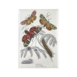 Moth Insects Rectangle Magnet