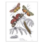 Moth Insects Small Poster