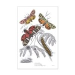 Moth Insects Mini Poster Print