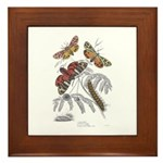 Moth Insects Framed Tile