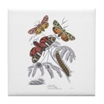 Moth Insects Tile Coaster