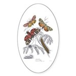 Moth Insects Oval Sticker
