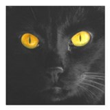 "Black Cats Rule Square Car Magnet 3"" x 3&quot"