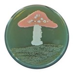 Mushroom Round Car Magnet