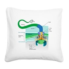 Morphology Square Canvas Pillow