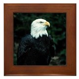Eagle Framed Tile