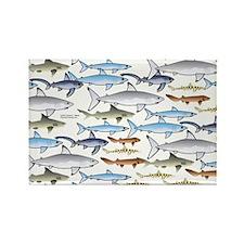School of Sharks 1 Rectangle Magnet (100 pack)