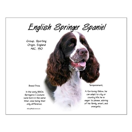 Liver English Springer Small Poster