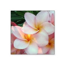 "Pretty Pink Plumeria Flowers Square Sticker 3"" x 3"