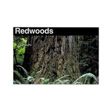 Redwoods National Park Rectangle Magnet
