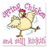 "Spring Chicken Square Car Magnet 3"" x 3"""