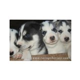 Husky Puppy Rectangle Magnet