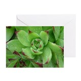 Artichoke Greeting Cards (Pk of 10)