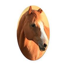 Horse portrait Oval Car Magnet