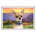 Chihuahua Meadow Banner