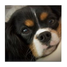 Cute King charles dog Tile Coaster