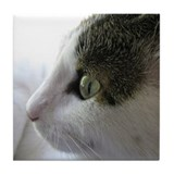 Green Eyed White Tabby Cat in Profile Tile Coaster