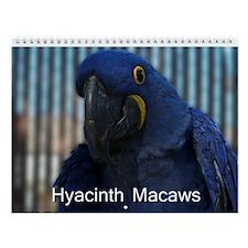 Hyacinth Macaw Wall Calendar