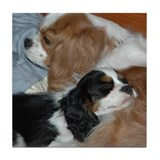 Cute Cavalier king charles Tile Coaster