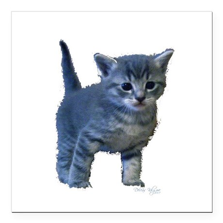 "kitten6a.png Square Car Magnet 3"" x 3"""