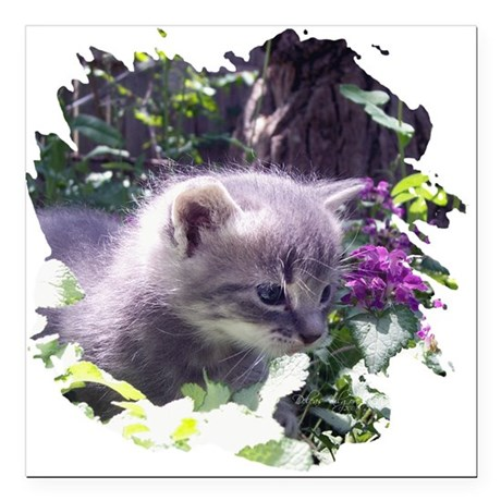 "kitten3b.png Square Car Magnet 3"" x 3"""