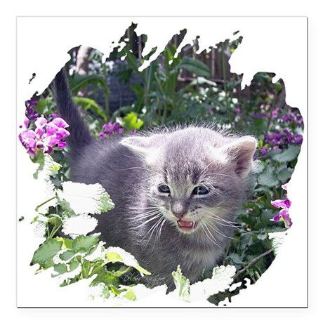 "kitten1b.png Square Car Magnet 3"" x 3"""