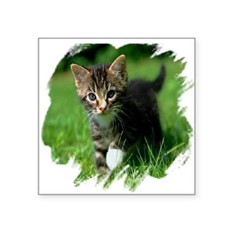 "kitten Square Sticker 3"" x 3"""