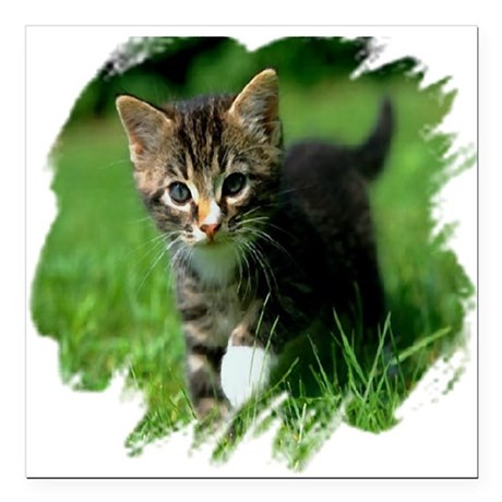 "kitten Square Car Magnet 3"" x 3"""
