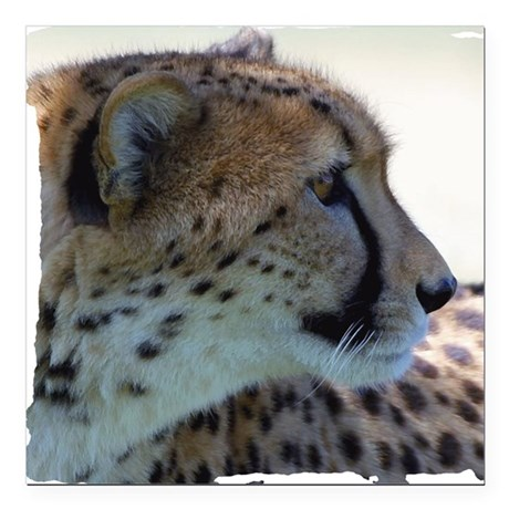 "cheeta Square Car Magnet 3"" x 3"""