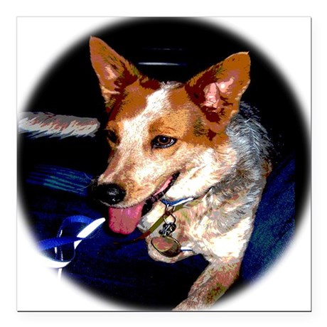"Red Heeler Square Car Magnet 3"" x 3"""
