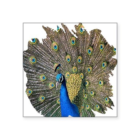 "peacock.png Square Sticker 3"" x 3"""