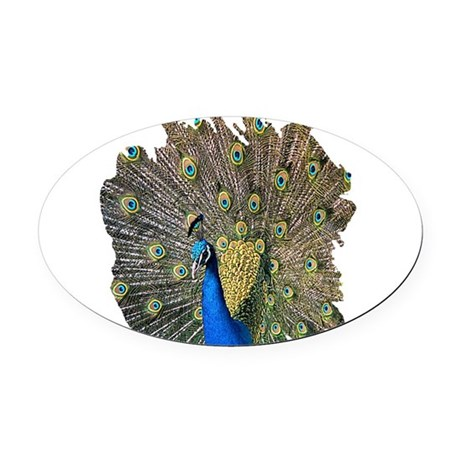 peacock.png Oval Car Magnet