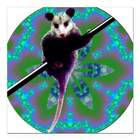 "Opossum Square Car Magnet 3"" x 3"""