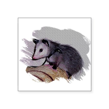 "Baby Possum Square Sticker 3"" x 3"""