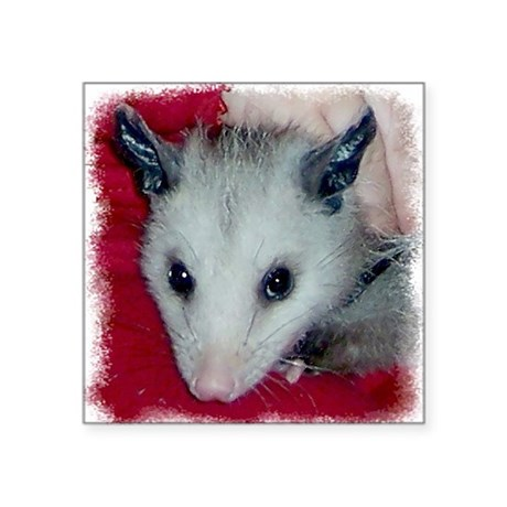 Little Possum Square Sticker 3&quot; x 3&quot;