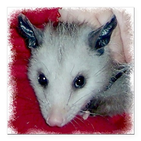 Little Possum Square Car Magnet 3&quot; x 3&quot;