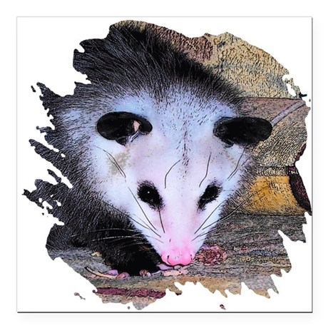 "possum Square Car Magnet 3"" x 3"""