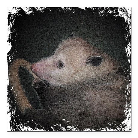 "Sleepy Possum Square Car Magnet 3"" x 3"""