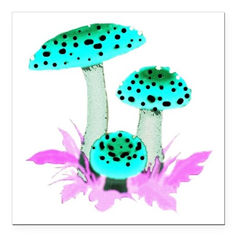 "mushrooms2f.png Square Car Magnet 3"" x 3"""