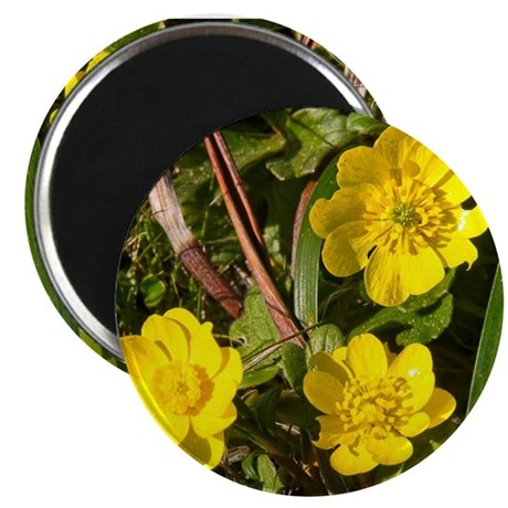 orange rose Round Compact Mirror