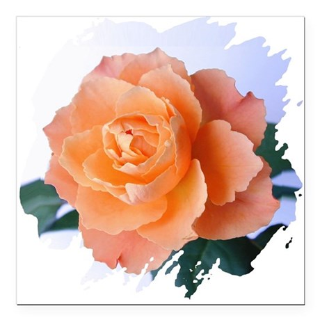 orange rose Square Car Magnet 3&quot; x 3&quot;