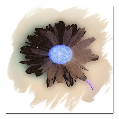 "Country Daisy Square Car Magnet 3"" x 3"""