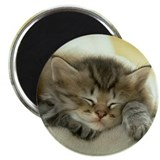 "sleeping kitty 2.25"" Magnet (10 pack)"